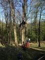 Gestione delle emergenze e recupero del ferito in tree climbing gestione-emergenze-tree-climbing-mark-bridge-025.jpg