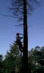 Seminario tecnico di arboricoltura presso Fondazione Cima seminario-cima-arboricoltura026.jpg
