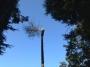 Seminario tecnico di arboricoltura presso Fondazione Cima seminario-cima-arboricoltura033.jpg
