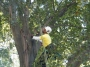Seminario arboricoltura moderna a Lubjana seminario-arboricoltura-lubjana-027.jpg