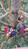 CORSO DI TREE CLIMBING - Operatori addetti ai sistemi di accesso e posizionamento mediante funi per lavori su alberi 12747910_1128585520519570_6236817200848615705_o.jpg