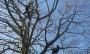 CORSO DI TREE CLIMBING - Operatori addetti ai sistemi di accesso e posizionamento mediante funi per lavori su alberi 12891099_1154396804605108_7060299267439587024_o-(1).jpg