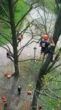 CORSO DI TREE CLIMBING - Operatori addetti ai sistemi di accesso e posizionamento mediante funi per lavori su alberi 12991045_1167602653284523_7279869434081339657_n.jpg