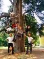 CORSO DI TREE CLIMBING - Operatori addetti ai sistemi di accesso e posizionamento mediante funi per lavori su alberi 13620209_1232797046765083_3100759493362524383_n.jpg