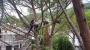 CORSO DI TREE CLIMBING - Operatori addetti ai sistemi di accesso e posizionamento mediante funi per lavori su alberi 14034839_1270248716353249_5100963022169676873_n.jpg