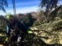 CORSO DI TREE CLIMBING - Operatori addetti ai sistemi di accesso e posizionamento mediante funi per lavori su alberi corso-tree-climbing-bologna.jpg