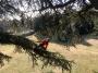 CORSO DI TREE CLIMBING - Operatori addetti ai sistemi di accesso e posizionamento mediante funi per lavori su alberi corso-tree-climbing-campania.jpg