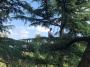 CORSO DI TREE CLIMBING - Operatori addetti ai sistemi di accesso e posizionamento mediante funi per lavori su alberi corso-tree-climbing-como.jpg