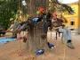 CORSO DI TREE CLIMBING - Operatori addetti ai sistemi di accesso e posizionamento mediante funi per lavori su alberi corso-tree-climbing-emilia-romagna.jpg