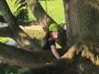 CORSO DI TREE CLIMBING - Operatori addetti ai sistemi di accesso e posizionamento mediante funi per lavori su alberi corso-tree-climbing-genova.jpg