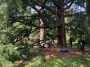CORSO DI TREE CLIMBING - Operatori addetti ai sistemi di accesso e posizionamento mediante funi per lavori su alberi corso-tree-climbing-lecco.jpg