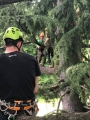 CORSO DI TREE CLIMBING - Operatori addetti ai sistemi di accesso e posizionamento mediante funi per lavori su alberi corso-tree-climbing-lecco1.jpg