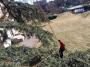 CORSO DI TREE CLIMBING - Operatori addetti ai sistemi di accesso e posizionamento mediante funi per lavori su alberi corso-tree-climbing-lombardia.jpg