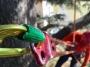 CORSO DI TREE CLIMBING - Operatori addetti ai sistemi di accesso e posizionamento mediante funi per lavori su alberi corso-tree-climbing-marche.jpg