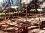 CORSO DI TREE CLIMBING - Operatori addetti ai sistemi di accesso e posizionamento mediante funi per lavori su alberi corso-tree-climbing-milano.jpg