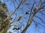 CORSO DI TREE CLIMBING - Operatori addetti ai sistemi di accesso e posizionamento mediante funi per lavori su alberi corso-tree-climbing-piemonte.jpg