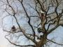CORSO DI TREE CLIMBING - Operatori addetti ai sistemi di accesso e posizionamento mediante funi per lavori su alberi corso-tree-climbing.JPG