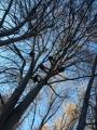 CORSO DI TREE CLIMBING - Operatori addetti ai sistemi di accesso e posizionamento mediante funi per lavori su alberi immagine-corso-treeclimbing.jpg