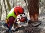 Utilizzo in sicurezza della motosega nelle operazioni di abbattimento ed allestimento (unità formativa F3) corso-forestale-f3-004.jpg