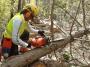 Utilizzo in sicurezza della motosega nelle operazioni di abbattimento ed allestimento (unità formativa F3) corso-forestale-f3-007.jpg